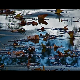 Luise Andersen Artwork Late Autumn I, 2012 Color Photograph, Abstract