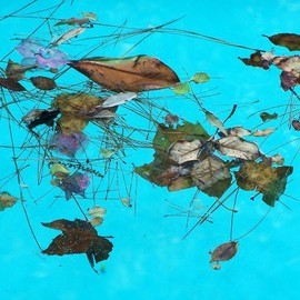 Luise Andersen Artwork MAGIC  in the pool I, 2010 Color Photograph, Floral