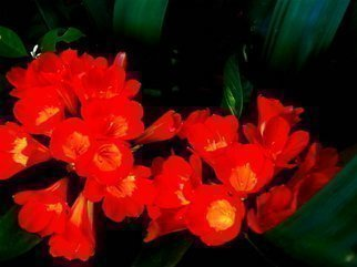 Undefined Medium by Luise Andersen titled: MIGNON EXTREME CLIVIA Digital Enhanced Four, created in 2007