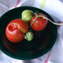 ODD PICKINGS   Tomatoe Series  On Glass On Copper No One Green