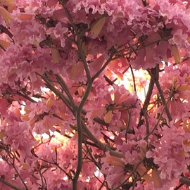 Luise Andersen Artwork PINKS III February 2015, 2015 Color Photograph, Trees