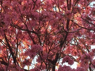 Luise Andersen Artwork PINKS II February 2015, 2015 Color Photograph, Trees