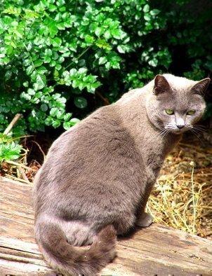 Luise Andersen Artwork PRISSY  Feline II  in Series, 2008 PRISSY  Feline II  in Series, Cats