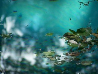 Luise Andersen Artwork PoolScape II , 2011 Color Photograph, Nature
