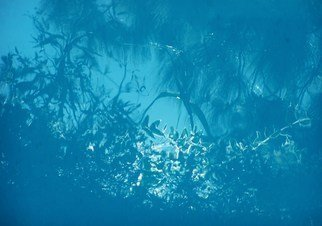 Luise Andersen Artwork REFLECTIONS In Pool JUNGLE BLUES, 2010 Color Photograph, Other