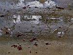 Color Photograph by Luise Andersen titled: Rain falling V MaySixTwoOtwelve, created in 2012