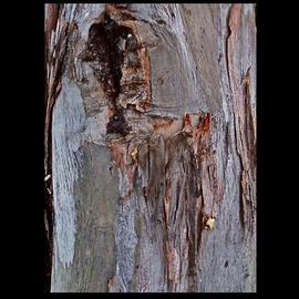 Luise Andersen Artwork Return To Core II TREE , 2013 Color Photograph, Abstract Figurative