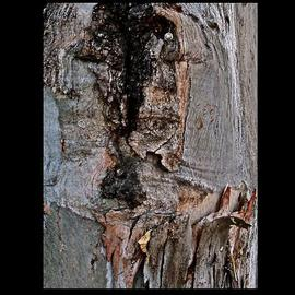 Luise Andersen Artwork Return To Core I TREE , 2013 Color Photograph, Abstract Figurative
