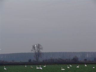 Undefined Medium by Luise Andersen titled: TREBUR  Germany  SWAN IN FLIGHT , 2007
