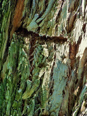 Luise Andersen Artwork TREE BARK AI, 2011 Color Photograph, Trees
