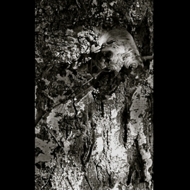 Luise Andersen Artwork TREE BARK The Spell Of I OCTTWTWOOTWLVE, 2012 Other Photography, Other