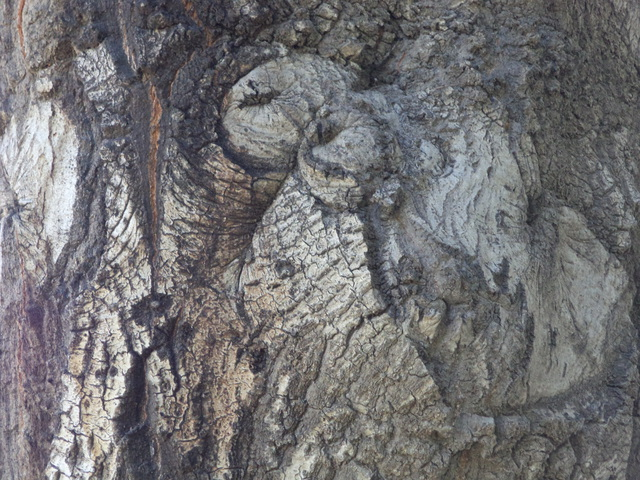 Artist Luise Andersen. 'TREE TRUNK Imagery II' Artwork Image, Created in 2013, Original Fiber. #art #artist