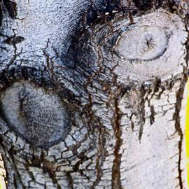 Luise Andersen: 'Through  eyes of Mignon TREE BARK III', 2013 Other Photography, Abstract. Artist Description:    . . . on my way back to where i live. . this still relative small tree called me. . have taken pix of her trunk before. . when she was even smaller than now. . but. . she had grown. . and developed a wider trunk. . circumference. . textures. . and colors. . figures and faces. . and sensual forms ...