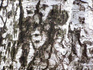 Luise Andersen Artwork Tree BARK I  Series of Tree Trunks, 2011 Color Photograph, Trees