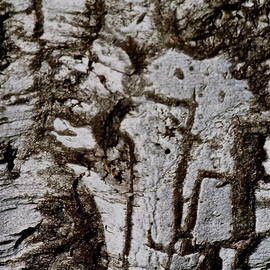 Trees And Images In Bark MIGTRE I