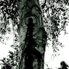 Trees And Images In Bark MIGTRE III