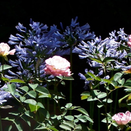 Luise Andersen: ' Summer Morning I', 2012 Color Photograph, Floral. Artist Description:   * * size for uploading purpose only      ...