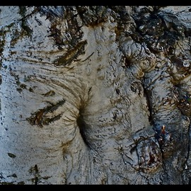 Luise Andersen Artwork bark of tree I MayTwentyTwo, 2013 Color Photograph, Trees