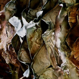 digital process from orig photograph OF EUCALYPTUS TREE BARK April ThrtnOTwelve