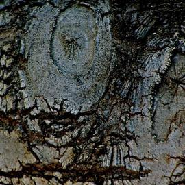 Luise Andersen: 'through  eyes of Mignon TREE BARK I', 2013 Other Photography, Abstract. Artist Description:  . . . on my way back to where i live. . this still relative small tree called me. . have taken pix of her trunk before. . when she was even smaller than now. . but. . she had grown. . and developed a wider trunk. . circumference. . textures. . and colors. . figures and faces. . and sensual forms ...