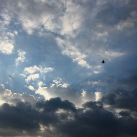 Luise Andersen Artwork wings on evening flight , 2015 Color Photograph, Clouds