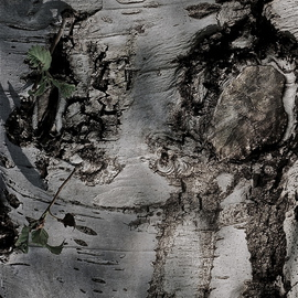 Luise Andersen: 'with the eyes of Mignon MIG I', 2012 Other Photography, Abstract. Artist Description:   . . tree bark. . . ...