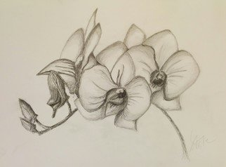 Laura Testa Artwork Orchids, 2015 Pencil Drawing, Floral