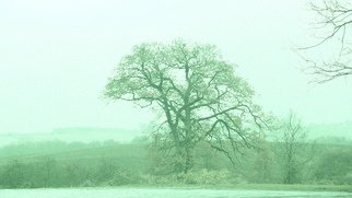Anya Knoche: 'The Tree', 2008 Other Photography, Undecided. Artist Description:  fotokunst- med eller uden indramning- forskellige storrelser ...