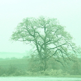 Anya Knoche: 'The Tree', 2008 Other Photography, New Age. Artist Description:  fotokunst- med eller uden indramning- forskellige storrelser ...