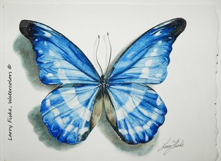 Artist: Larry Fiske - Title: Morpho rhetenor helena, from Peru - Medium: Watercolor - Year: 2012