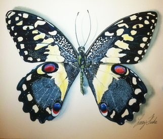 Artist: Larry Fiske - Title: Papilio Demodocus, From Africa - Medium: Watercolor - Year: 2012