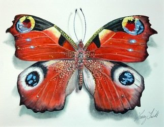 Artist: Larry Fiske - Title: The Peacock Butterfly - Medium: Watercolor - Year: 2012