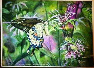 Artist: Larry Fiske - Title: de graafs Giant Swallowtail - Medium: Watercolor - Year: 2013