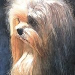 Yorkie in the night By James Dailey