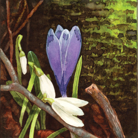 Crocus By Lisa Pagnutti