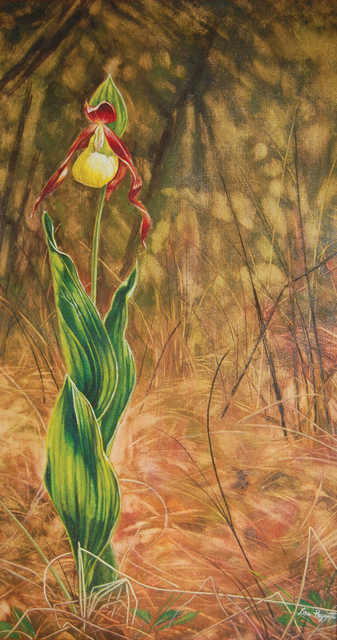 Artist Lisa Pagnutti. 'Cypripedium' Artwork Image, Created in 2015, Original Watercolor. #art #artist