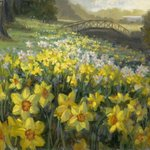Daffodils at Mona Vale By Livia Dias