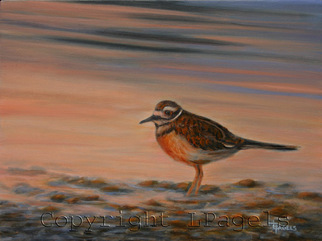 Artist: Laurie Pagels - Title: Killdeer - Medium: Oil Painting - Year: 2008