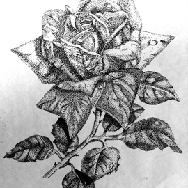 Lacey Smith Artwork Ink Pointilism Rose, 2011 Marker Drawing, Botanical