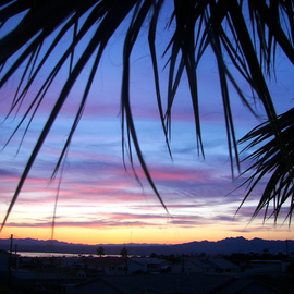 Laurie Delaney: 'Summer Nights', 2011 Color Photograph, Landscape. Artist Description: Palm tree, sunset, Arizona, sunset silhouette.   ...