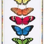 Rainbow Butterflies By Lucy Arnold