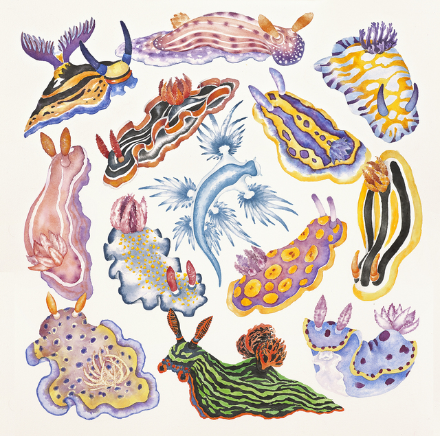 Lucy Arnold  'Toxic Tango 1 Sea Slugs', created in 2014, Original Watercolor.