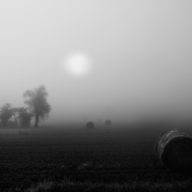 Bernhard Luettmer: 'Der Nebel', 2010 Black and White Photograph, Landscape. Artist Description:                            Landscape in Tuscany/ Landscape, italy, tuscany, morning, totady, tree,                           ...