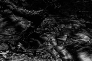 Bernhard Luettmer: 'SCHWARZES WASSER VI', 2010 Black and White Photograph, Abstract Landscape.                        Landscape in Tuscany/ Landscape, italy, tuscany, morning, totady, tree,                       ...
