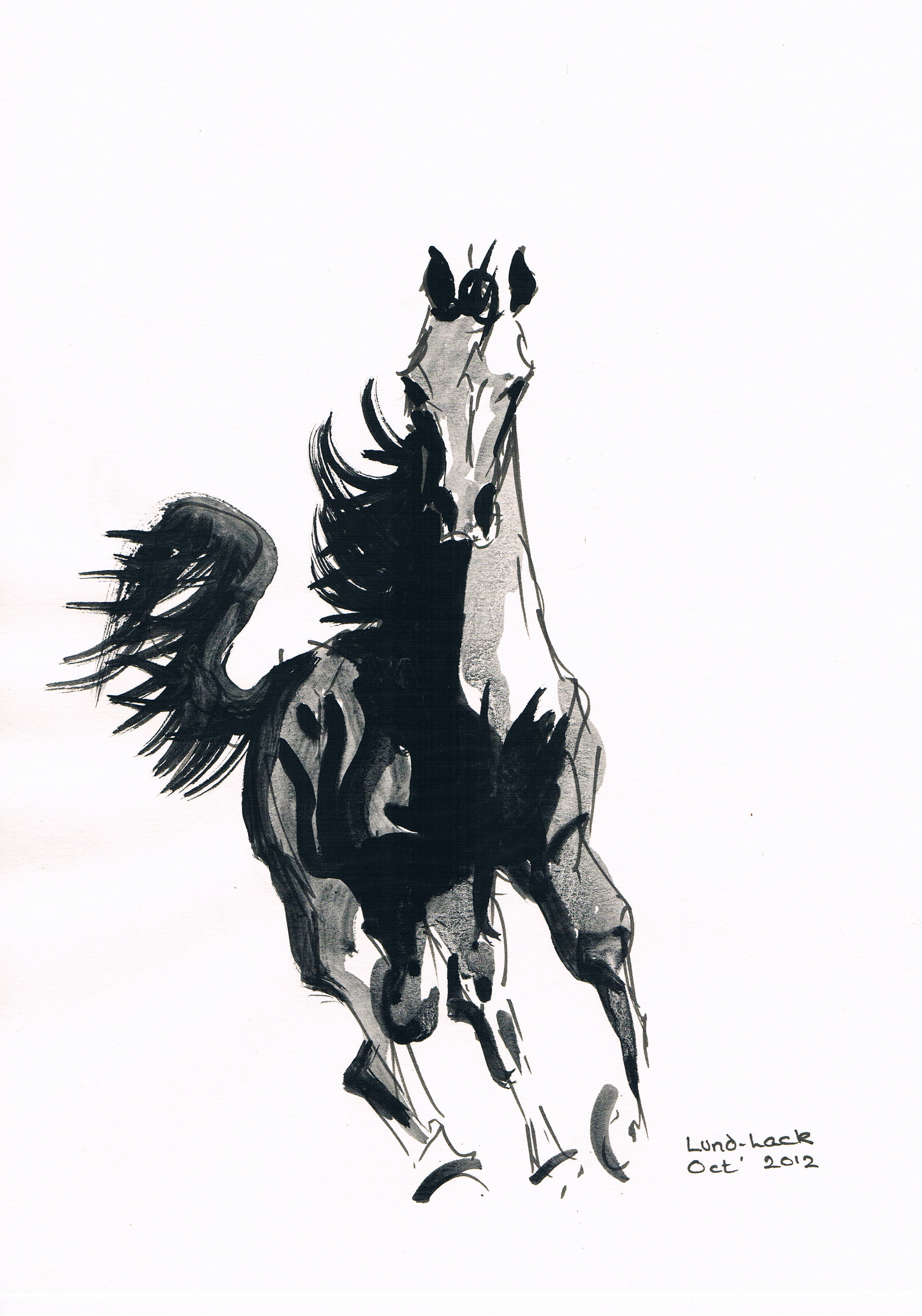 Running Horse No 2 Ink Painting By Tom Lund Lack Absolutearts Com