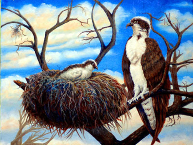 Lora Vannoord  'Osprey', created in 2011, Original Painting Other.