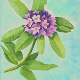 Lora Vannoord: 'Rododendrom', 2011 Oil Painting, Floral. Artist Description:  Original oil painting of the Flower in my garden. Includes a 1 inch wooden frame ...