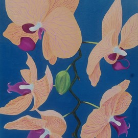 Lora Vannoord: 'peach orchids', 2018 Oil Painting, Floral. Artist Description: An original oil painting on canvas.  Inspired by my new love of orchids since living in Florida...