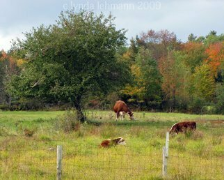 Color Photograph by Lynda Lehmann titled: A Country Dream, created in 2009