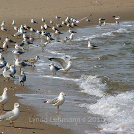 Lynda Lehmann: 'Anticipation', 2010 Color Photograph, Beauty. Artist Description:  Seagulls checking out the sparkling blue- green water and breaking waves on Long Island Sound, for a meal. Keywords: water, nature, beach, beauty, scenic, sand, texture, shore, seagull, wildlife, bird, marine, coastal ...